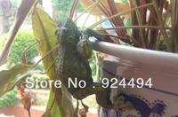 Rustic home animal balcony decoration flower pot frog decoration resin craft