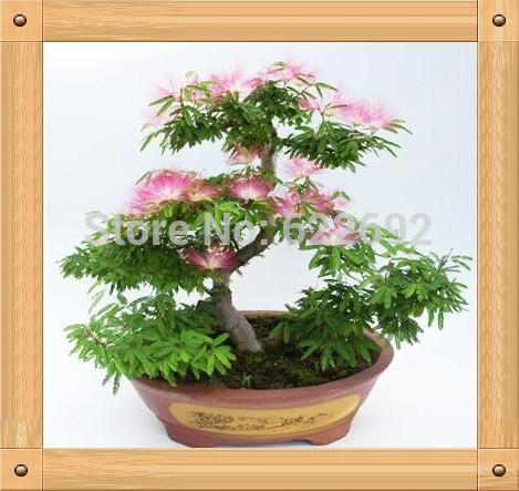 Silk Bonsai Trees Bonsai Silk Tree Mimosa