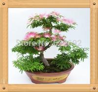 30 Piece/Bag Bonsai Perfume Albizia Flower Seeds  Mimosa Seeds Potted Silk Tree Seeds