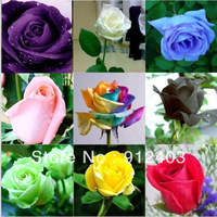 (Promotion ! ) 200 pcs 8 colors rose Seeds mixed order free shipping.
