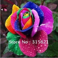 FREE SHIPPING  MULTI-COLOR RAINBOW ROSE SEEDS* RUGOSA ROSE   NEW ROSE SEEDS 200pcs/lot  HOME GARDEN