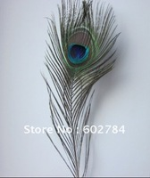 Top quality peacock feather,100pcs/lot, length 10-12inches, eye width 3.5cm ,beautiful natural peacock feather,Free Shipping!