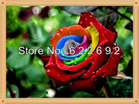 Free Shipping 200 Piece Dreams Mystic Rainbow Rose seeds , Sofiat Lincoln Flower Seeds
