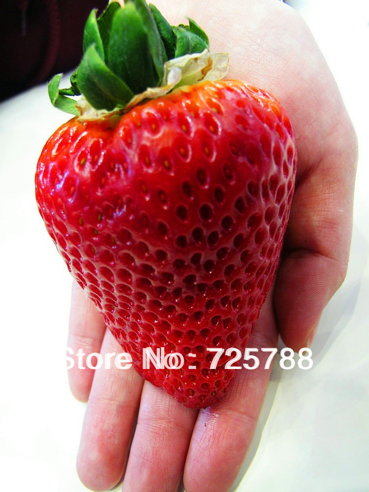 Super big strawberries seeds,flower seed,garden supply, perfume bonsai,ghd,home & garden,home decor(China (Mainland))