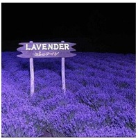 1 Pack 20 Seeds Purple Lavender Seed Flower Seed DIY Home Gardening IZ0010  Wholesale