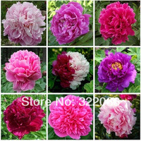 Free shipping 30pcs /5 bags perennial peony peony root seedlings when flowering potted flowers survival package