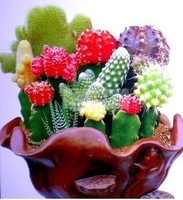 Mix order $5 Mixture Color Cactus Seeds Good Plant Free Shipping