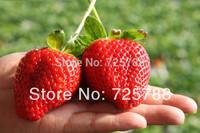 Super big strawberries seeds garden supply, perfume bonsai home & garden,home decor