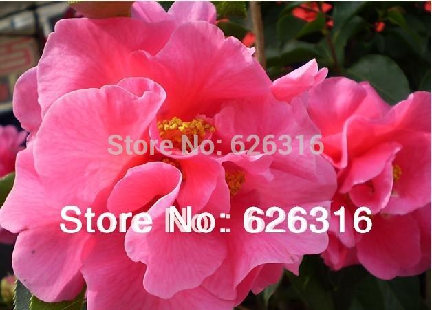 купить Карликовое дерево 1 60PCS/diy недорого