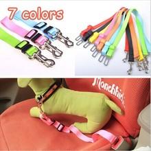 dog collar promotion