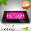 180W(60*3w) LED Plant Grow Light Panel Red Blue