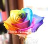(NOW BUY ONE GET ONE FREE ,YOU WILL GET DOUBLE )  100 Seeds Rare Holland Rainbow Rose Flower Seed To Your Lover ITEM LABEL:ROSE9