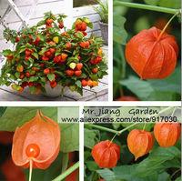 Physalis Alkekengi Seeds  * 1 Pack  ( 50 Seeds) * Physalis Pruinosa * Chinese Lantern Seeds * Free Shipping