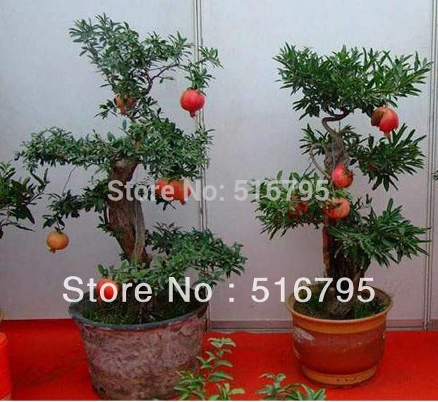 Free Shipping bonsai tree pomegranate seeds home plant Delicious fruit 100pcs/lot(China (Mainland))