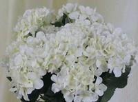 Economic!Free Shipping(24pcs/Lot)Good Quality!Silk Artificial Hydrangea flower HEAD,Head Diameter about 15cm,6C can Mix Per Lot