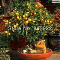 12 SEEDS BONSAI SMALL ORANGE SWEET LOVELY FRUIT SEEDS DIY HOME GARDEN BACKYARD HEIRLOOM SHIPS FREE